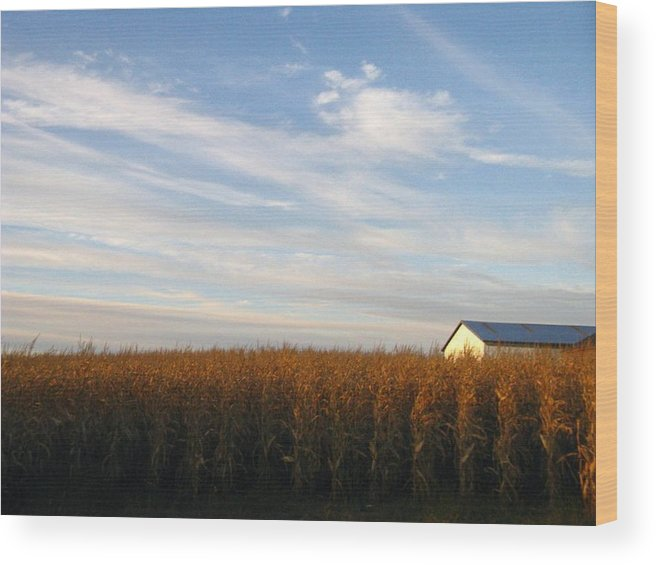 Country Wood Print featuring the photograph Fields Of Gold by Rhonda Barrett