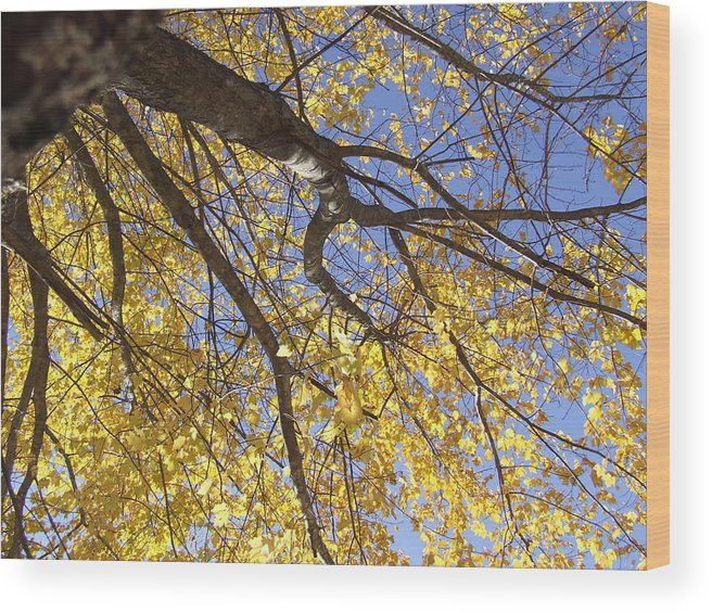 Trees Wood Print featuring the photograph Final Fallout by Samantha Gilbert