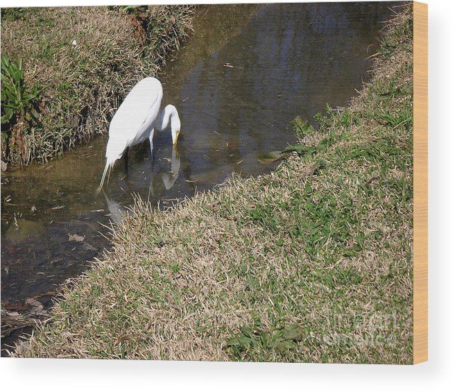 Nature Wood Print featuring the photograph Finding Breakfast by Lucyna A M Green