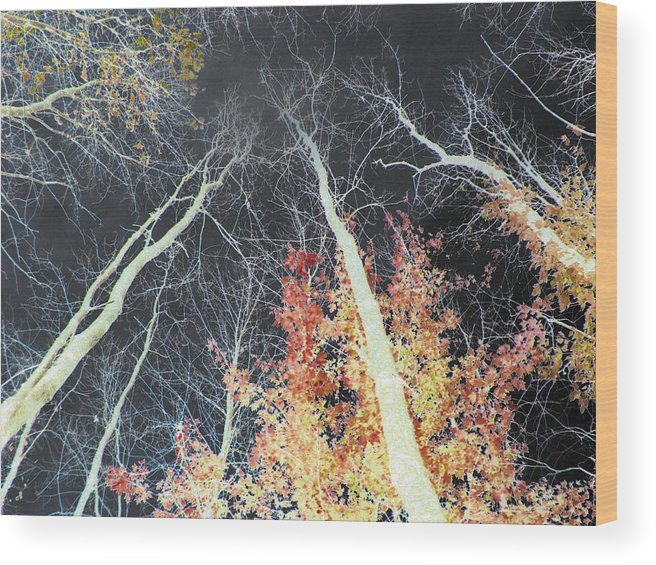 Trees Wood Print featuring the photograph Firestorm by Rose Dellinger