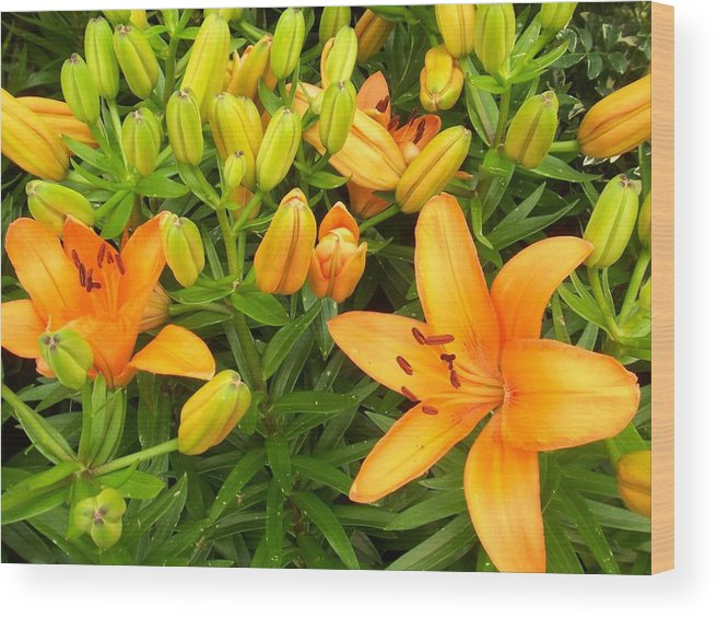 Flower Wood Print featuring the photograph First Orange Lillies by Ellen B Pate