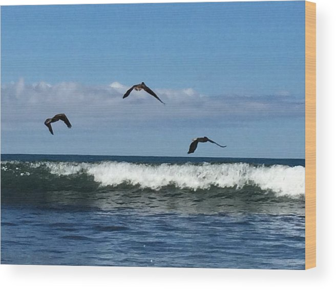 Pelicans Wood Print featuring the photograph Fishermen by Natalia Wallwork