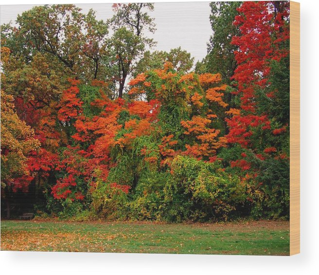 Wildwood Park Wood Print featuring the photograph Flamboyant Forest by Michiale Schneider