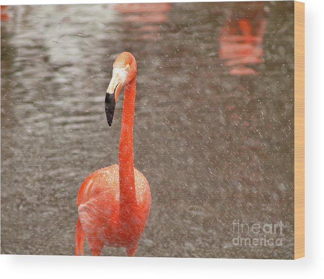 Flamingo Wood Print featuring the photograph Flamingo by Valerie Morrison