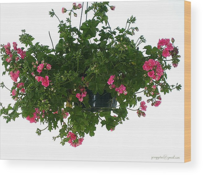 Flowers Wood Print featuring the photograph Flower Pot by Gerard Yates