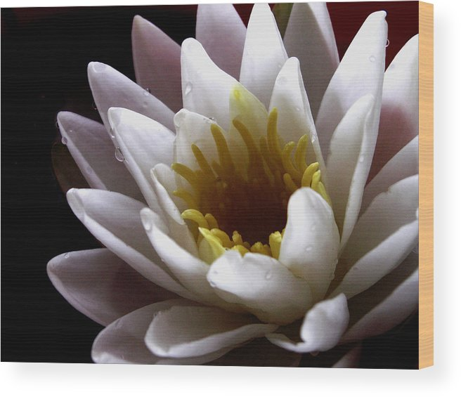 Flowers Wood Print featuring the photograph Flower Waterlily by Nancy Griswold