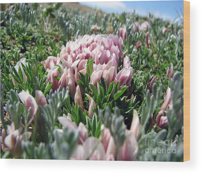 Flowers Wood Print featuring the photograph Flowers In The Alpine Tundra by Amanda Barcon