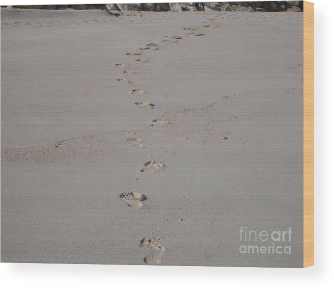 Sand Wood Print featuring the photograph Follow Me by PJ Cloud
