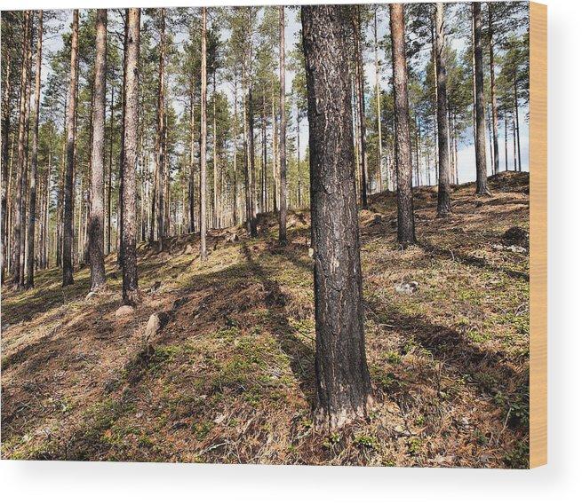 Lehtokukka Wood Print featuring the photograph Forest Next Summer After A Fire by Jouko Lehto