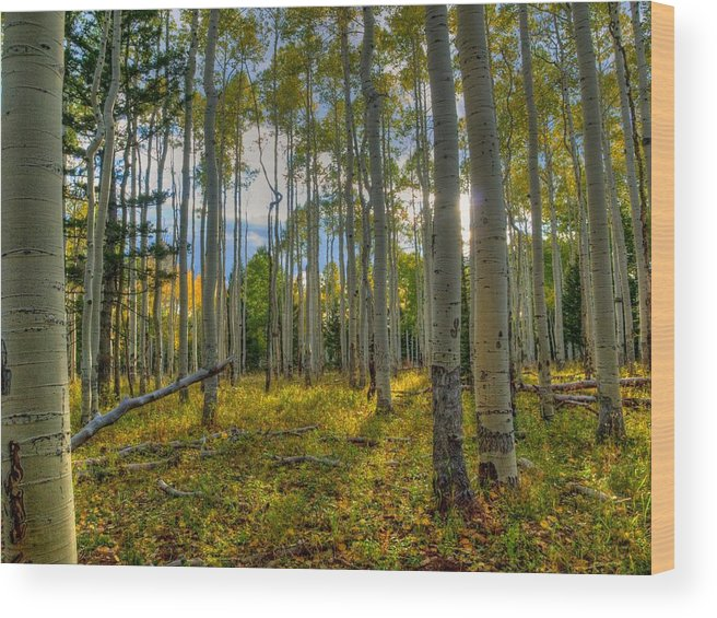 Fall Wood Print featuring the photograph Forest Sunlight by Linda Weyers