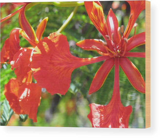 Tropical Flowers Wood Print featuring the photograph Fourth Of July by Arry Murphey