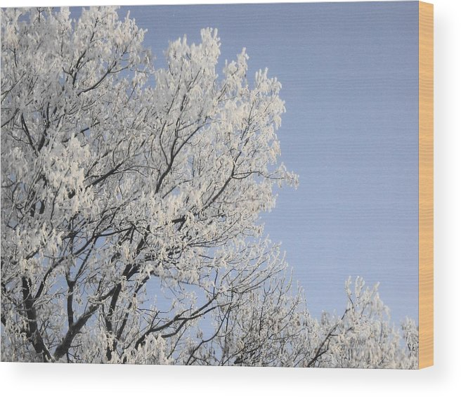 Photograph Wood Print featuring the photograph Frost Cover Maple Trees by Janice Robertson