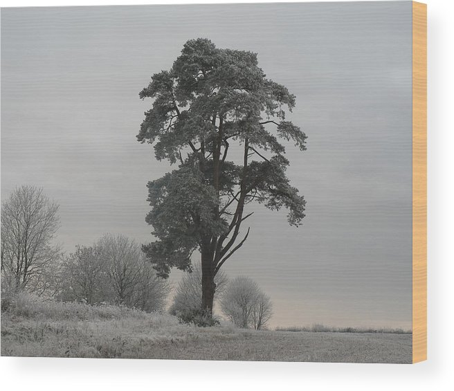 Tree Wood Print featuring the photograph Frosty Morning 2 by Lynne Iddon