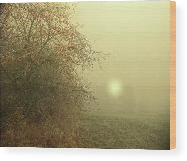 Frost Wood Print featuring the photograph Frosty Morning by Alex Lim