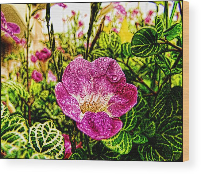 Garden Wood Print featuring the photograph Garden Flower by Galeria Trompiz