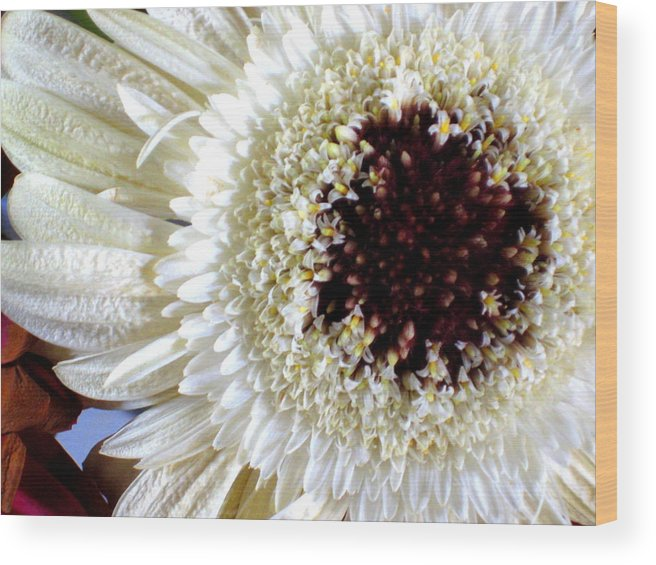 Gerbera Wood Print featuring the photograph Gerbera by Erika Lesnjak-Wenzel