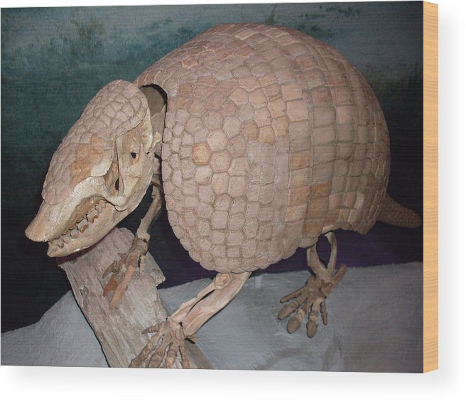 Giant Armadillo Wood Print featuring the photograph Giant Armadillo 2 by Warren Thompson