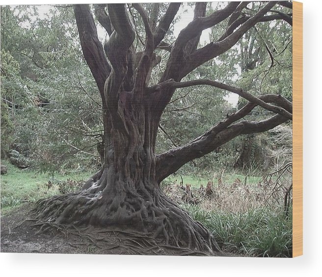 Nature Wood Print featuring the photograph Gnarled Oak by William Thomas