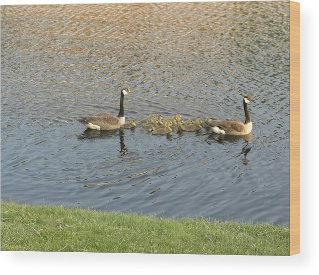 Geese Wood Print featuring the photograph Goose Pond 1 by Nancy Ferrier