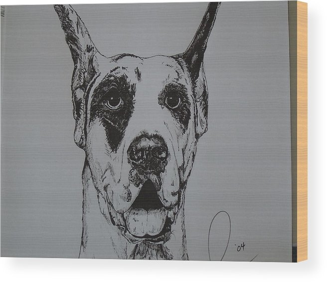 Dogs Wood Print featuring the drawing Great Dane by Raymond Nash