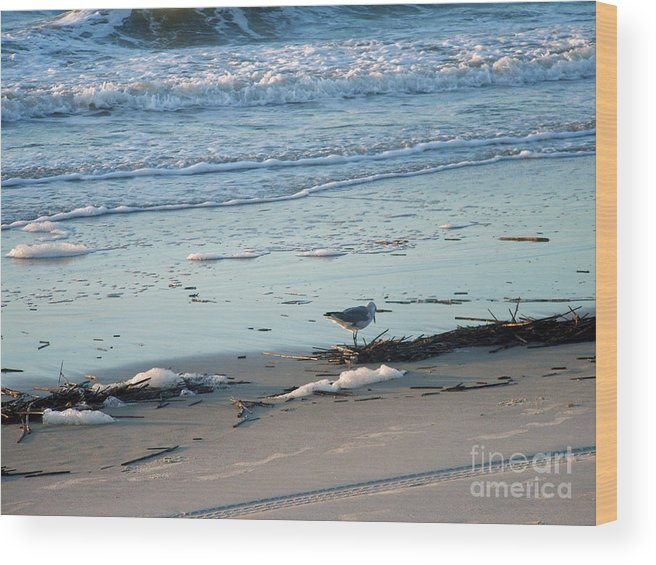 Gull Wood Print featuring the photograph Gull Fishes Tybee Island Beach by Doris Blessington