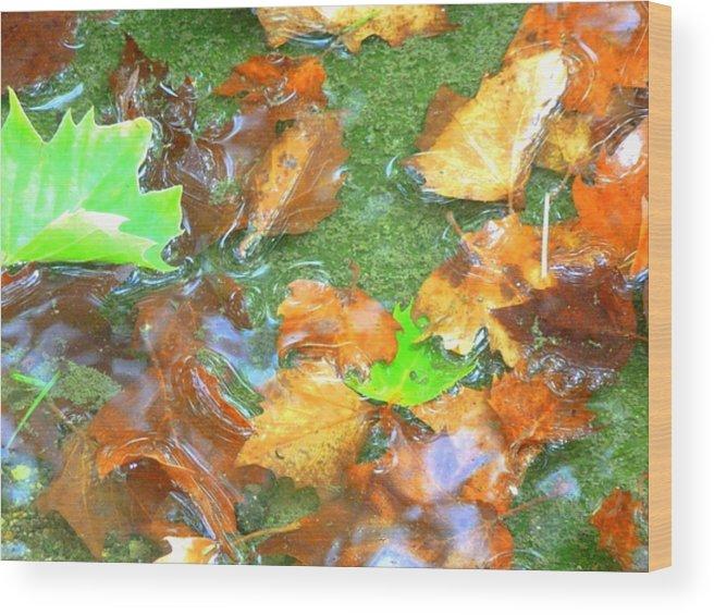 Gutter Clutter Wood Print featuring the photograph Gutter Clutter by Beth Akerman