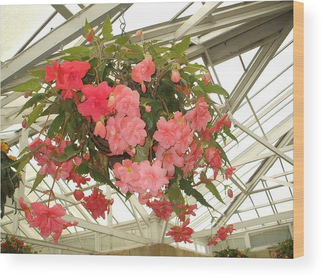Begoniias Basket Flowers Pink Structural Contrast Wood Print featuring the photograph Hanging Garden by Bethwyn Mills