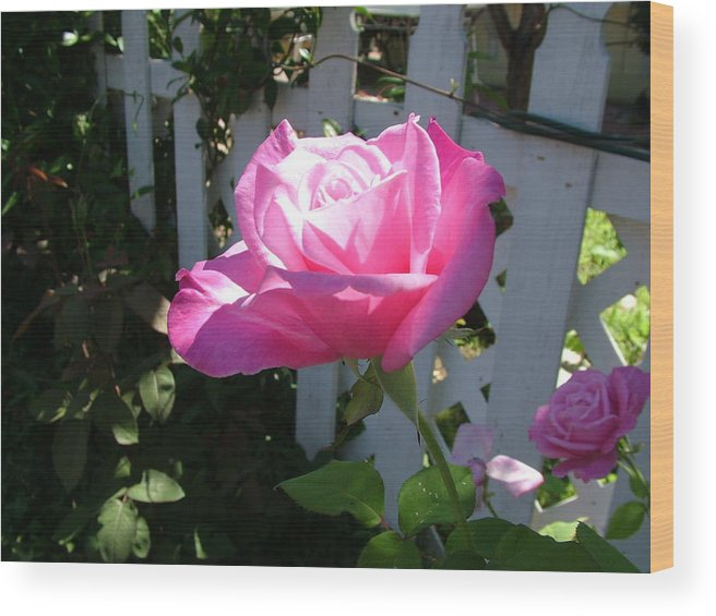 Rose Wood Print featuring the photograph Heavenly Rose by John Loyd Rushing