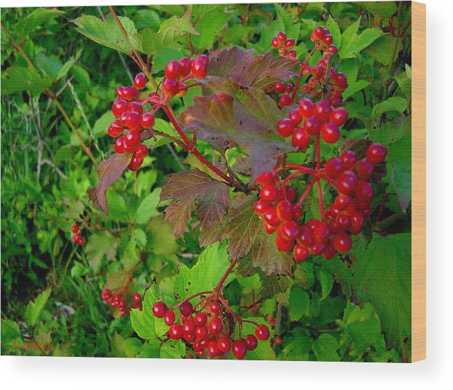 Hi Bush Cranberries Berries Wood Print featuring the photograph Hi Bush Cranberry Close Up by Joanne Smoley