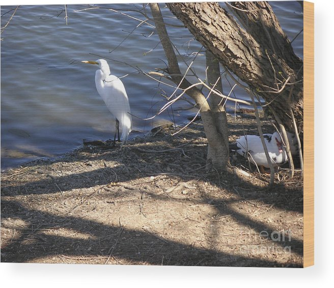 Nature Wood Print featuring the photograph Hiding And Seeking by Lucyna A M Green