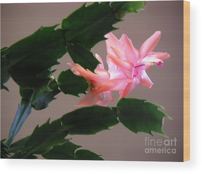Nature Wood Print featuring the photograph Holiday Cactus - On Wings by Lucyna A M Green