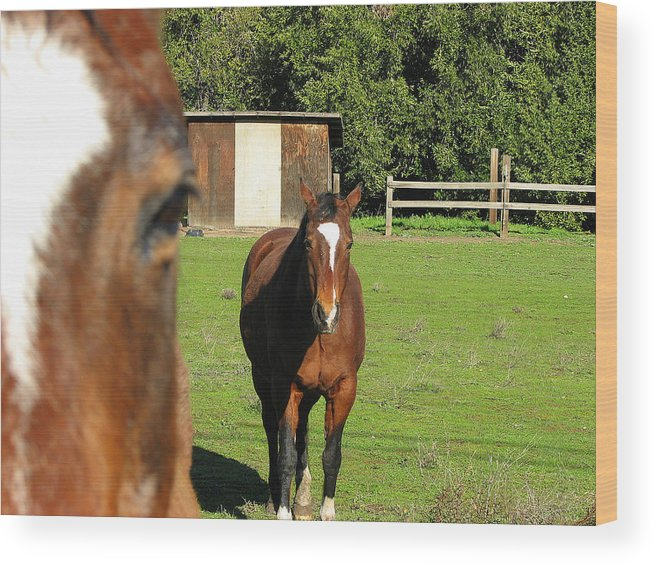 Horse Wood Print featuring the photograph Horses by Kathy Roncarati
