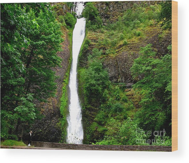 Waterfall Wood Print featuring the photograph Horsetail Falls by PJ Cloud