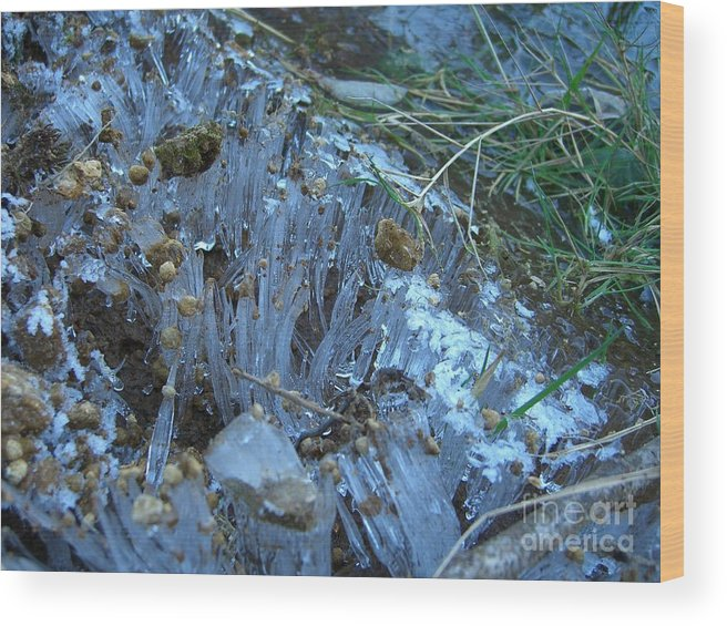 Ice Wood Print featuring the photograph Ice Shards by Jim Thomson