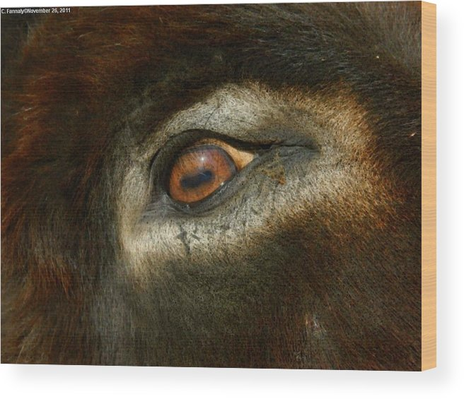 Equidae Wood Print featuring the photograph In A Donkey's Eye by Carol Fannaly