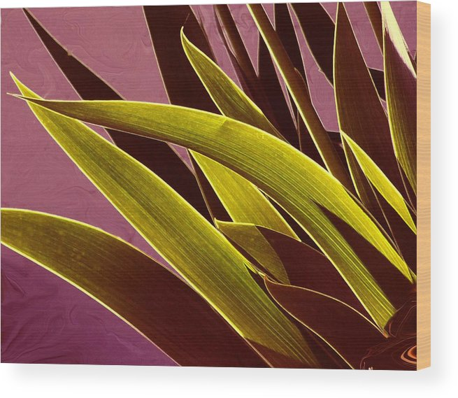 Leaves Wood Print featuring the photograph Iris Art by Jim Darnall