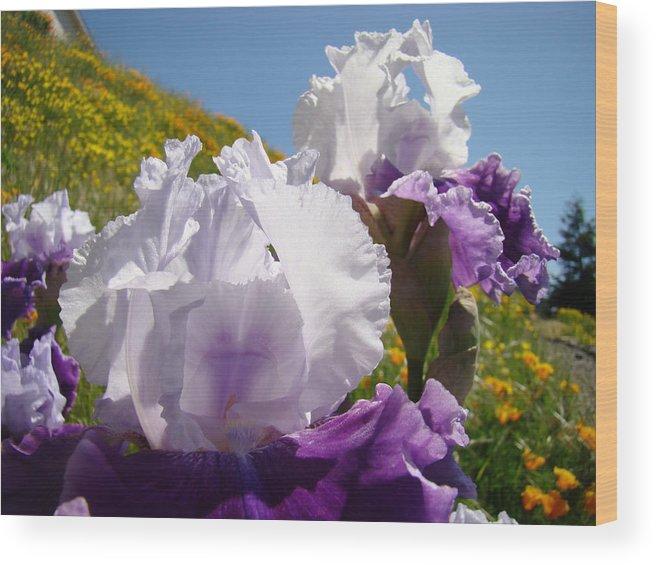 �irises Artwork� Wood Print featuring the photograph Iris Flowers Purple White Irises Poppy Hillside Landscape Art Prints Baslee Troutman by Baslee Troutman