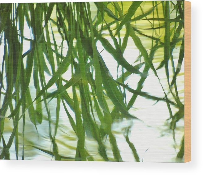 Iris Wood Print featuring the photograph Iris Reflections by Barbara St Jean