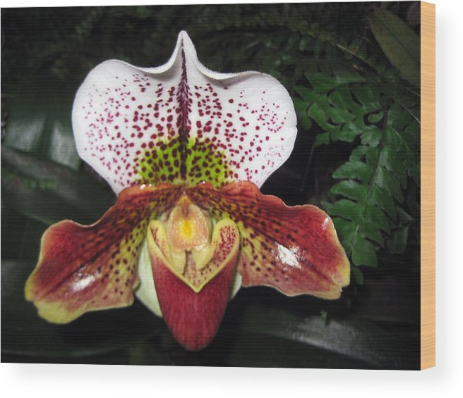 Flower Wood Print featuring the photograph Iris by Sean Owens