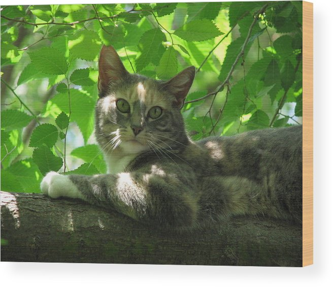 Wood Print featuring the photograph Ivy In The Tree by Kathy Roncarati