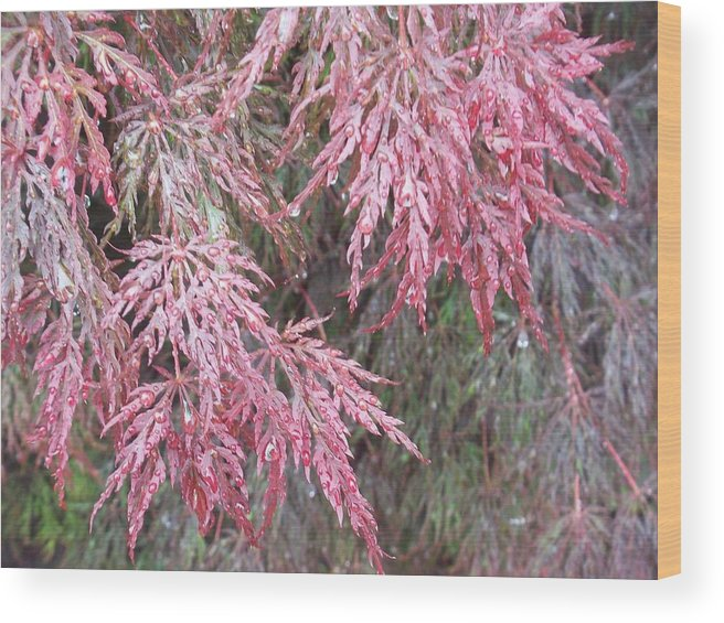 Maple Tree Wood Print featuring the photograph Japanese Maple In The Rain by Ellen B Pate
