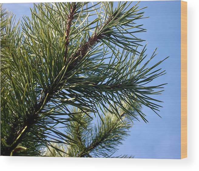 Pine Wood Print featuring the photograph Joy by Marilynne Bull