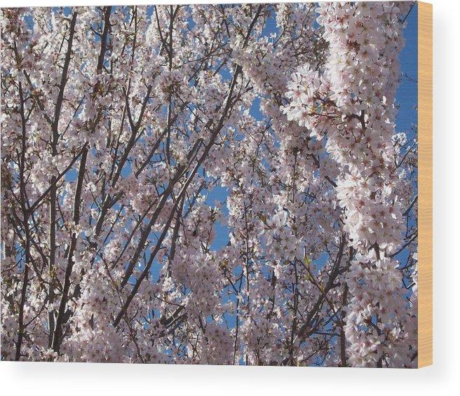 Photo Wood Print featuring the photograph Joy Of Spring by Helene Champaloux-Saraswati