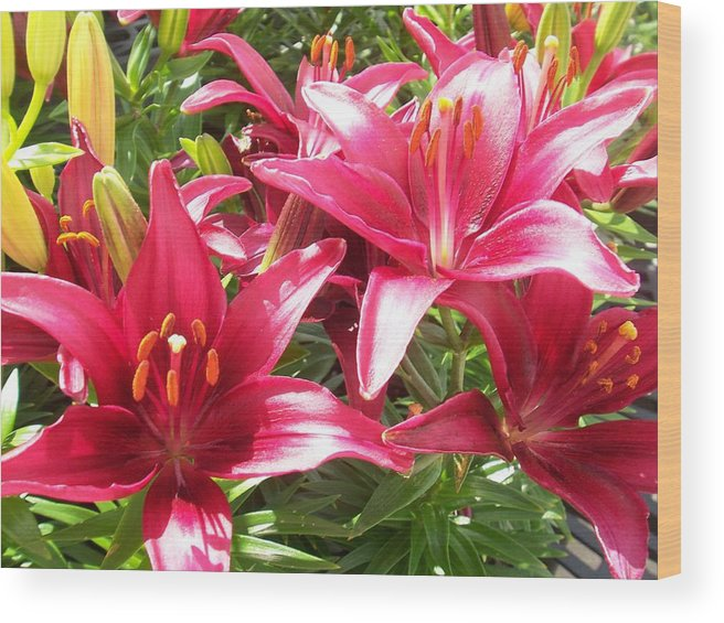 Flowers Wood Print featuring the photograph Joyful Red Lillies by Ellen B Pate