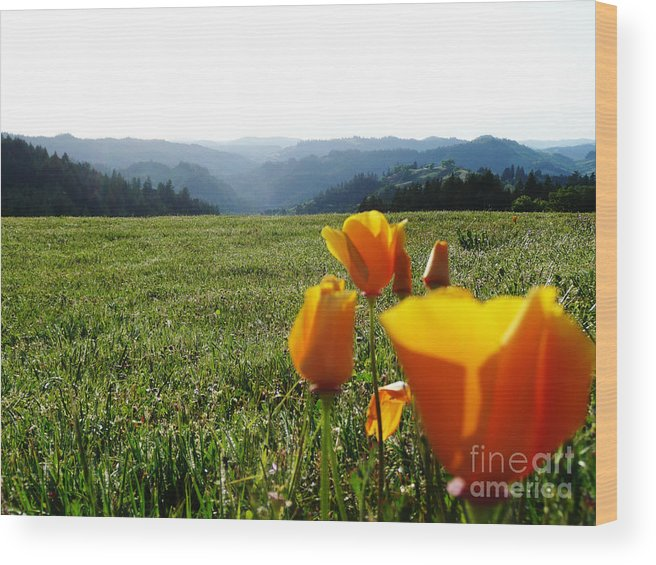 Poppies Wood Print featuring the photograph Jubilant Poppies by JoAnn SkyWatcher