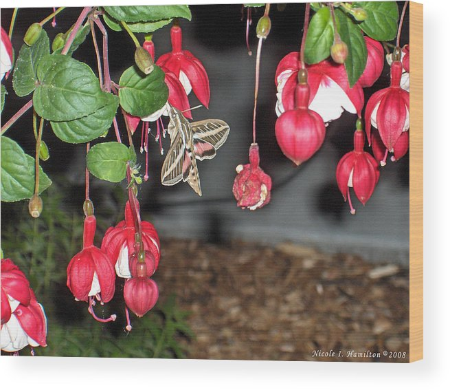 Moth Wood Print featuring the photograph Just A Snack by Nicole I Hamilton