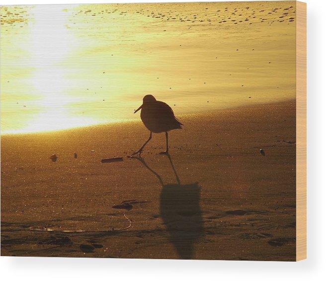 Sandpiper Wood Print featuring the photograph Keep Truckin by John Loyd Rushing