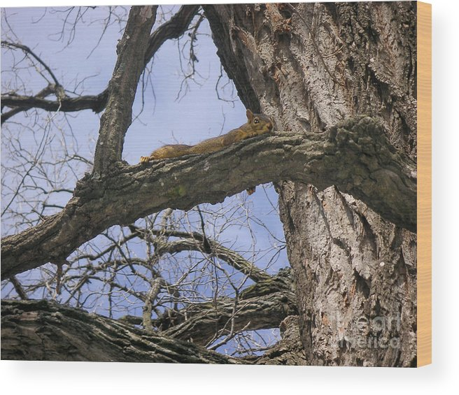 Nature Wood Print featuring the photograph Keeping A Low Profile by Lucyna A M Green