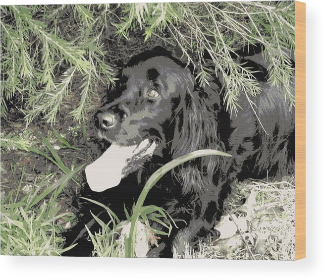 Kit Wood Print featuring the photograph Kit by Dianne Pettingell