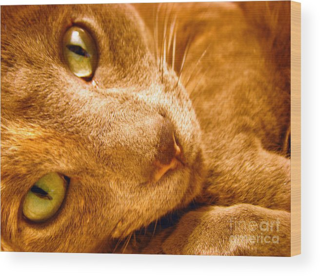 Cats Wood Print featuring the photograph Kitty by Amanda Barcon